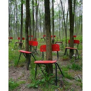 Chaises et arbres